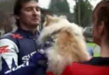 video-chstoso-moto-perro