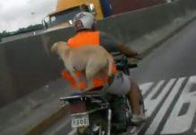 video-viajar-con-un-perro-en-moto